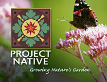 Project Native
